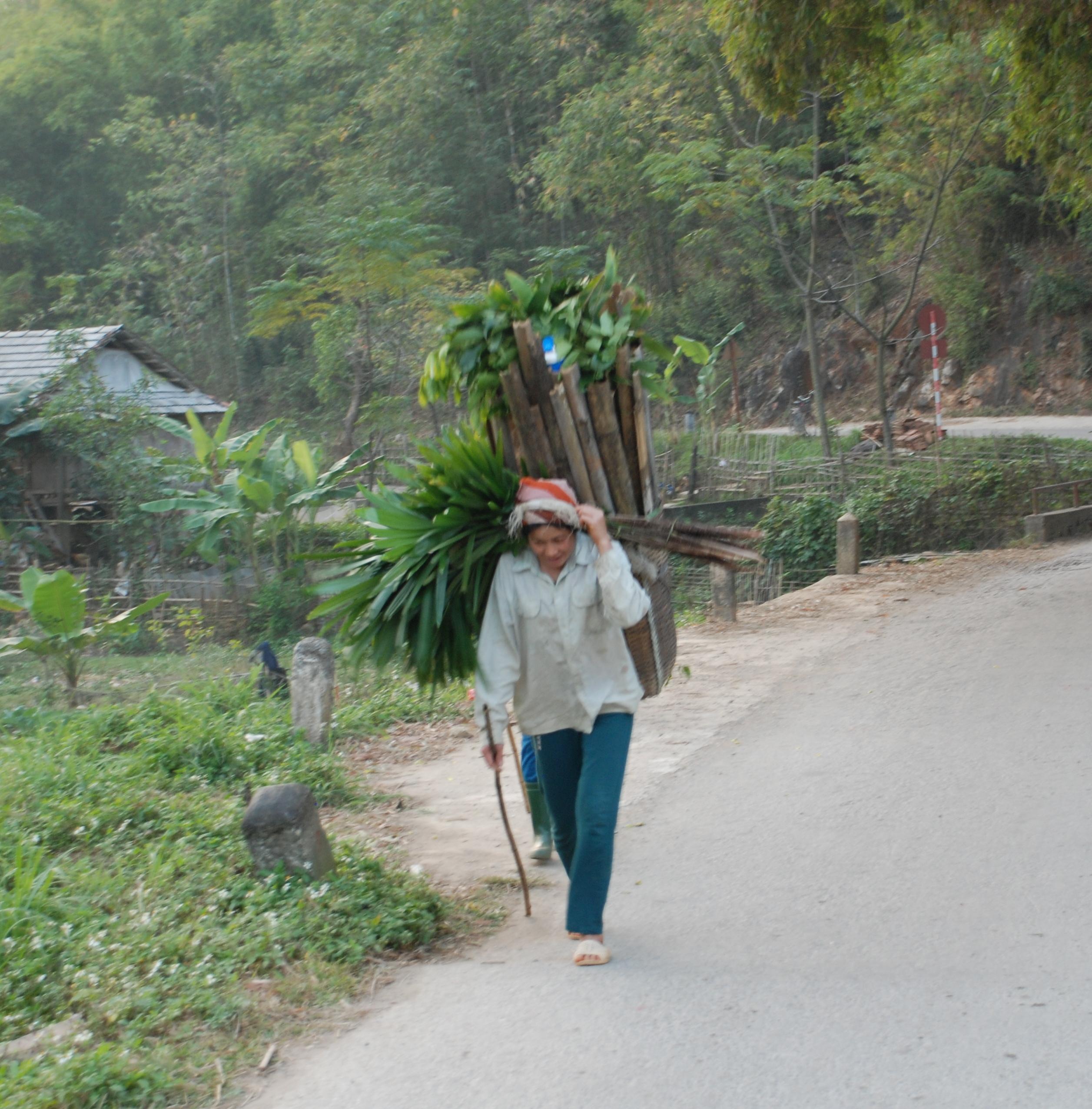 Dall odore del napalm al profumo dei fiori di loto. Parte I  Vietnam del  nord 9009dc612eab