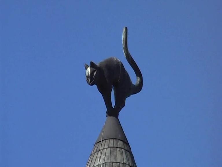 Riga gatto nero